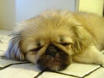 głowa śpiący obraz royalty free