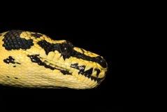 głowa 3 wąż Fotografia Stock