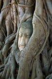 Głowa antyczna rzeźba Buddha który rósł w drzewnych korzenie Symboli/lów miasta Ayutthaya, Tajlandia Fotografia Stock