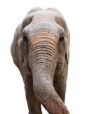 Głowa Azjatycki słoń Fotografia Stock