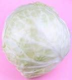Głowa Biała kapusta na Różowym tle Obraz Stock