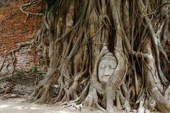 Głowa Buddha Obrazy Royalty Free