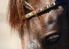 Głowa czerwony koń z piękną uzdą Zdjęcia Stock