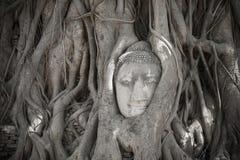 głowa jest buddy drzewa zdjęcie stock