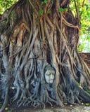 głowa jest buddy drzewa fotografia royalty free