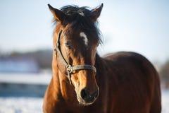 Głowa koń Fotografia Royalty Free