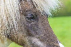 Głowa konia zakończenie up Fotografia Stock