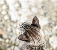 Głowa kot dla tła Fotografia Royalty Free