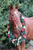 Głowa młody thoroughbred koń z boże narodzenie dekoracją zdjęcia royalty free