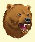 Głowa niedźwiedź Zdjęcie Royalty Free