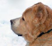 Głowa pies obrazy royalty free