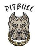 Głowa pit bull z łańcuchem Fotografia Royalty Free