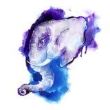 Głowa słoń Obraz Stock