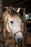 Głowa strzelająca koń Zdjęcia Stock