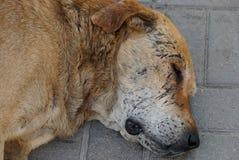 Głowa wielki brown przybłąkany pies kłama na szarym chodniczku zdjęcie stock