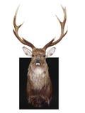 głowa wspinał się dziewięć punktów s jelenia zdjęcia stock