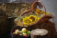 Głowy adra, jabłka i słoneczniki, Żniwo na haystack Obraz Stock