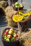 Głowy adra, jabłka i słoneczniki, Żniwo na haystack Fotografia Royalty Free