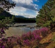Główny wiosna festiwal w Altai górach obrazy stock