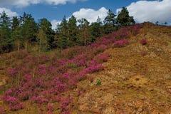 Główny wiosna festiwal w Altai górach obraz stock
