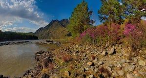 Główny wiosna festiwal w Altai górach obrazy royalty free