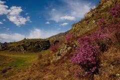 Główny wiosna festiwal w Altai górach zdjęcia royalty free