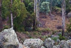 głazów drzewa lasowi Obraz Royalty Free