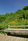 głazów ogródy obraz royalty free