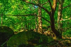 Głaz i stary bukowy drzewo Obrazy Royalty Free