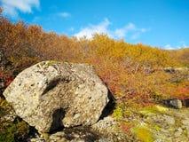Głaz na Iceland w jesieni z krzakami w tle Fotografia Royalty Free