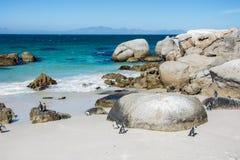 Głazu penquin kolonia przy Simonstown Zdjęcie Royalty Free