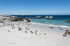 Głazu penquin kolonia przy Simonstown Zdjęcia Stock