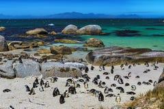 Głazu pingwinu kolonia Fotografia Stock
