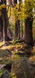 Głazy i drzewa w lesie Obrazy Royalty Free