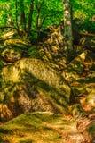 Głazy w przedpolu i drzewa w tle Obraz Royalty Free