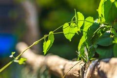 Gąbki gurda na bambusa ogrodzeniu obrazy royalty free