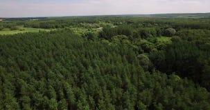 G??boki las w lato anteny wideo zbiory wideo