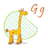 G for giraffe Stock Photos