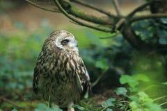 gå i ax owlkortslutning Royaltyfri Foto