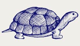 Gå i ax sköldpaddan Arkivbild