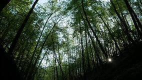 G? i sommarskogen stock video