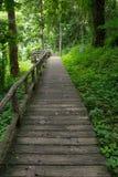 Gå långt i skogen Arkivbild