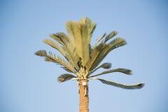G-/Mbasisstation im Sharm el Sheikh Lizenzfreie Stockfotografie