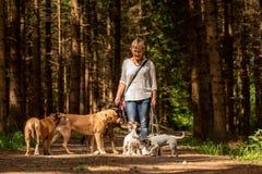 G? med m?nga hundkappl?pning p? en koppel Hundbarnvakt med olika hundavel i den härliga skogen royaltyfri fotografi