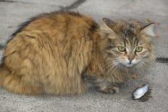 Głodny kot. obrazy stock