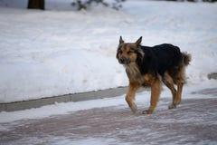 głodny pies Zdjęcie Royalty Free
