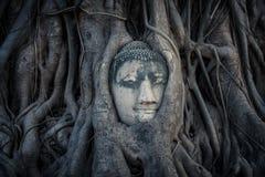 Głowa Buddha Obraz Royalty Free