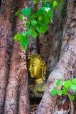 Głowa Buddha w Bodhi drzewie Zdjęcie Stock