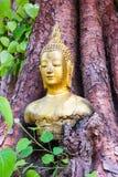 Głowa Buddha w Bodhi drzewie Obrazy Royalty Free