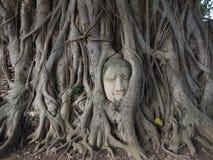 głowa jest buddy drzewa Obrazy Stock